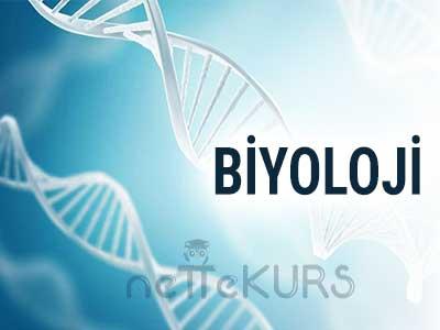 YGS-LYS Biyoloji Dersleri