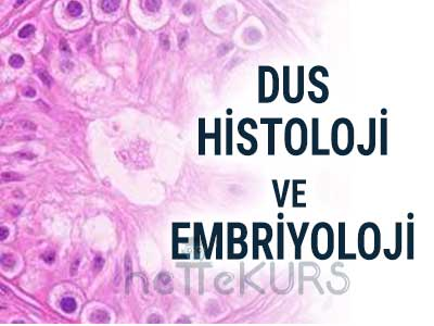 DUS Histoloji ve Embriyoloji Video Ders