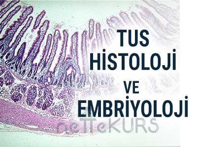 TUS Histoloji ve Embriyoloji Video Ders