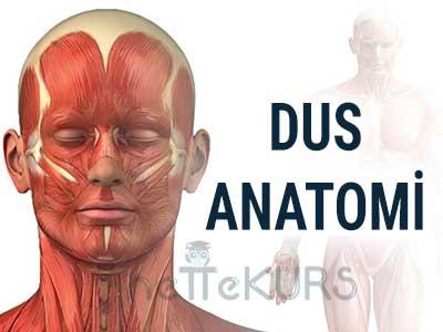 DUS Anatomi Dersleri